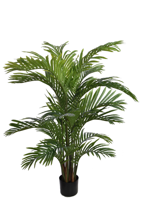 hawaiian palm tree with 18 leaves in pot green