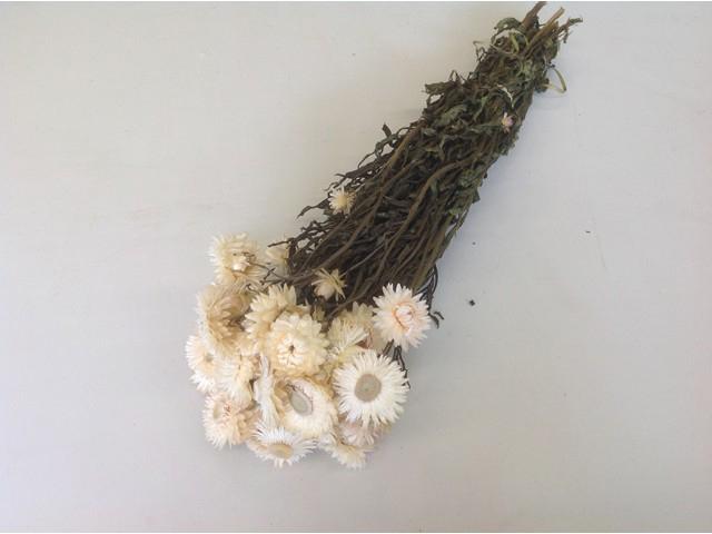 cp helichrysum wit naturel
