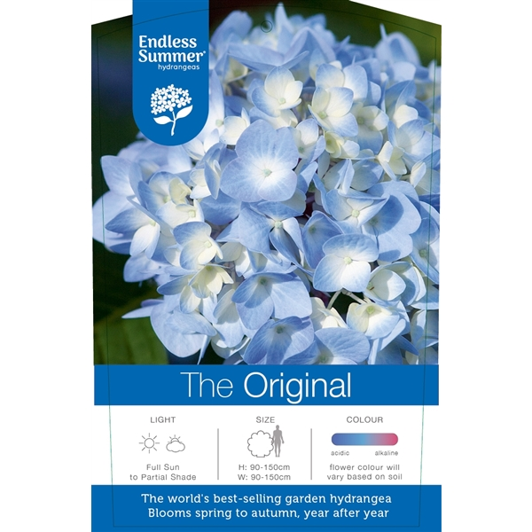 hydrangea endless summer 'the original blue'