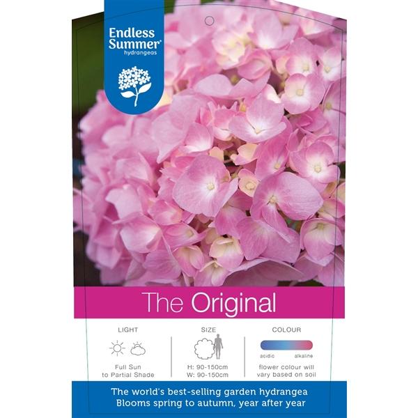 hydrangea endless summer 'the original pink'