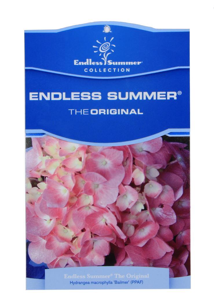 hydrangea endless summer 'bloom star pink'