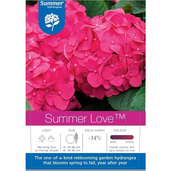 hydrangea endless summer 'summer love'