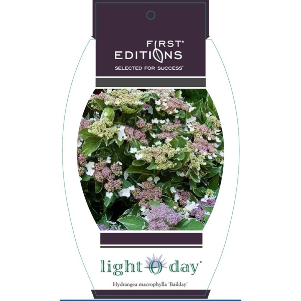 hydrangea macrophylla 'light o day'®