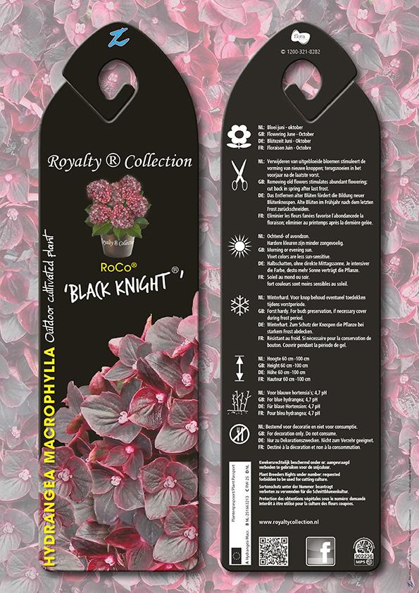 hydrangea macrophylla 'roco black knight'