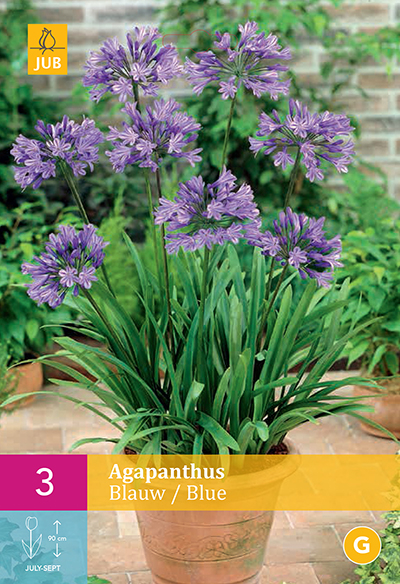 jub agapanthus blauw 1/2 (3sts)