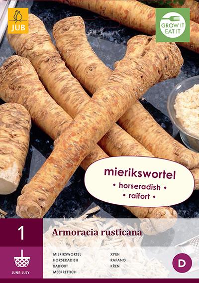 jub armoracia rusticana - mierikswortel i