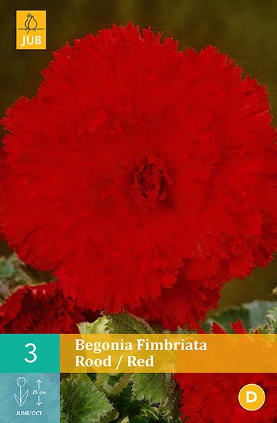 jub begonia fimbriata rood 5/6 (3sts)