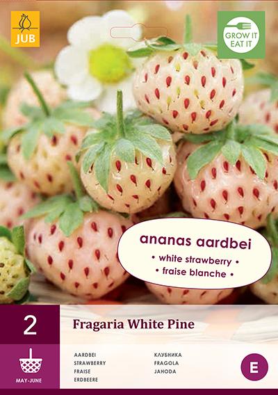jub fragaria white pine i (2sts)