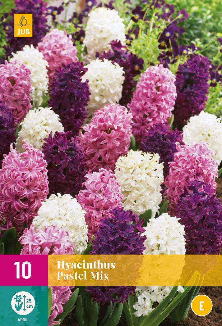jub hyacinthus pastel mix (10sts)