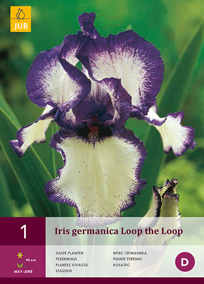 jub iris germanica loop the loop i