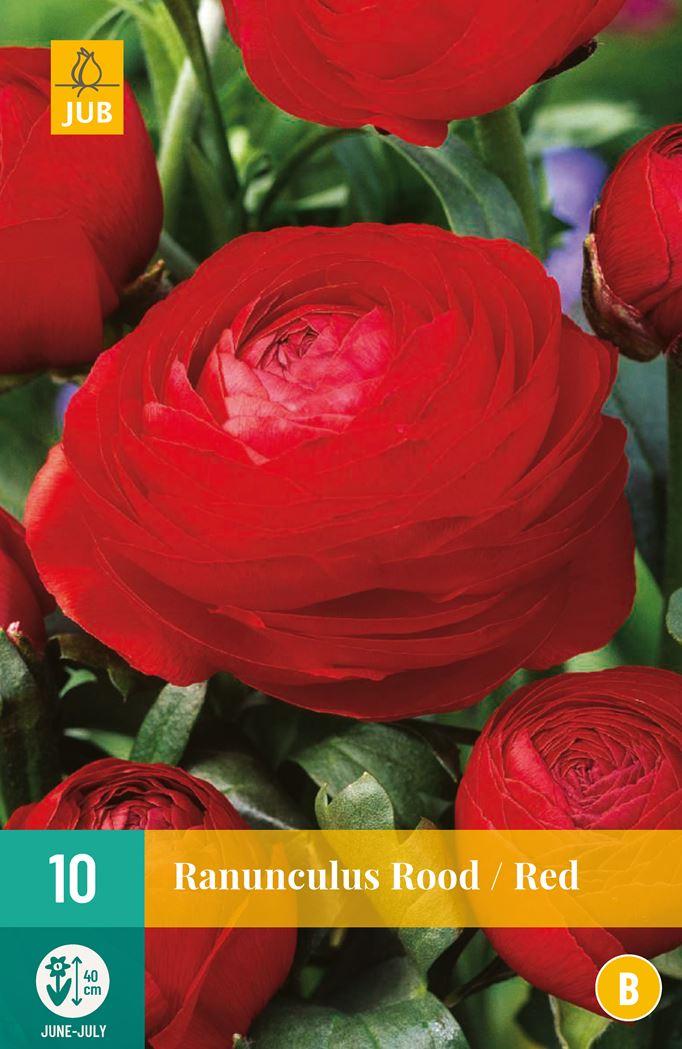 jub ranunculus rood (10sts)