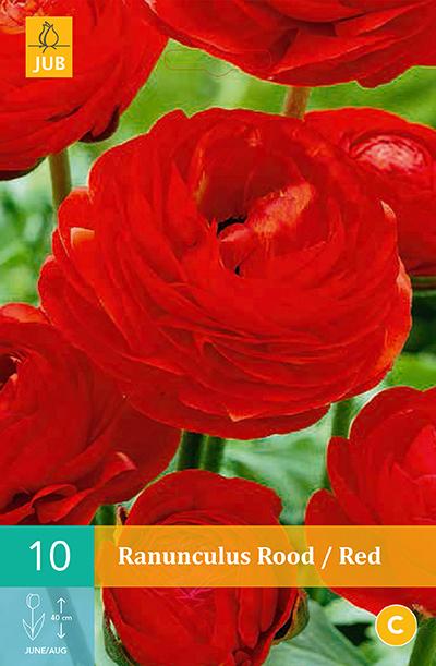 jub ranunculus rood vj 6/7 (10sts)