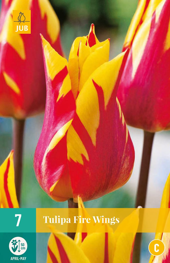 jub tulipa fire wings (7sts)