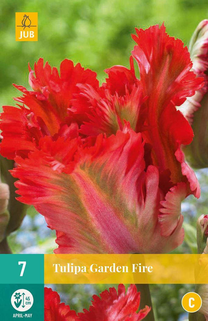 jub tulipa garden fire (7sts)