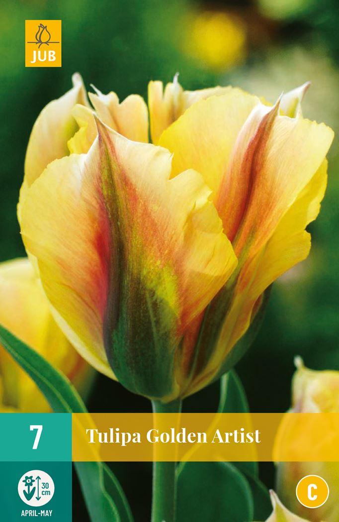 jub tulipa golden artist (7sts)