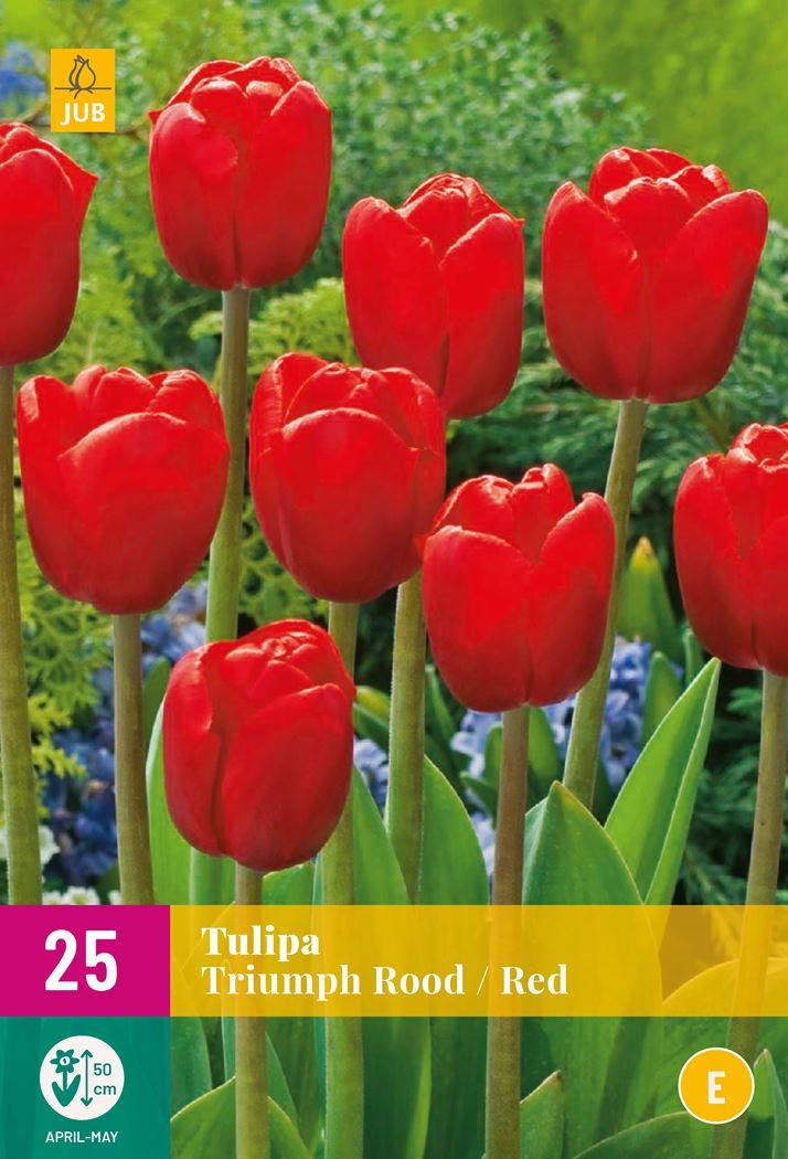jub tulipa triumph rood (25sts)