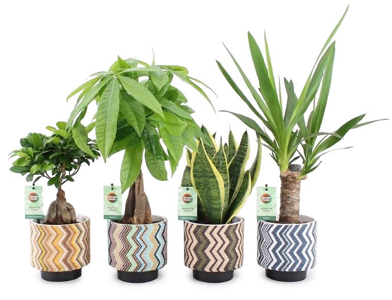 kamerplant gemengd in bohemian keramiek