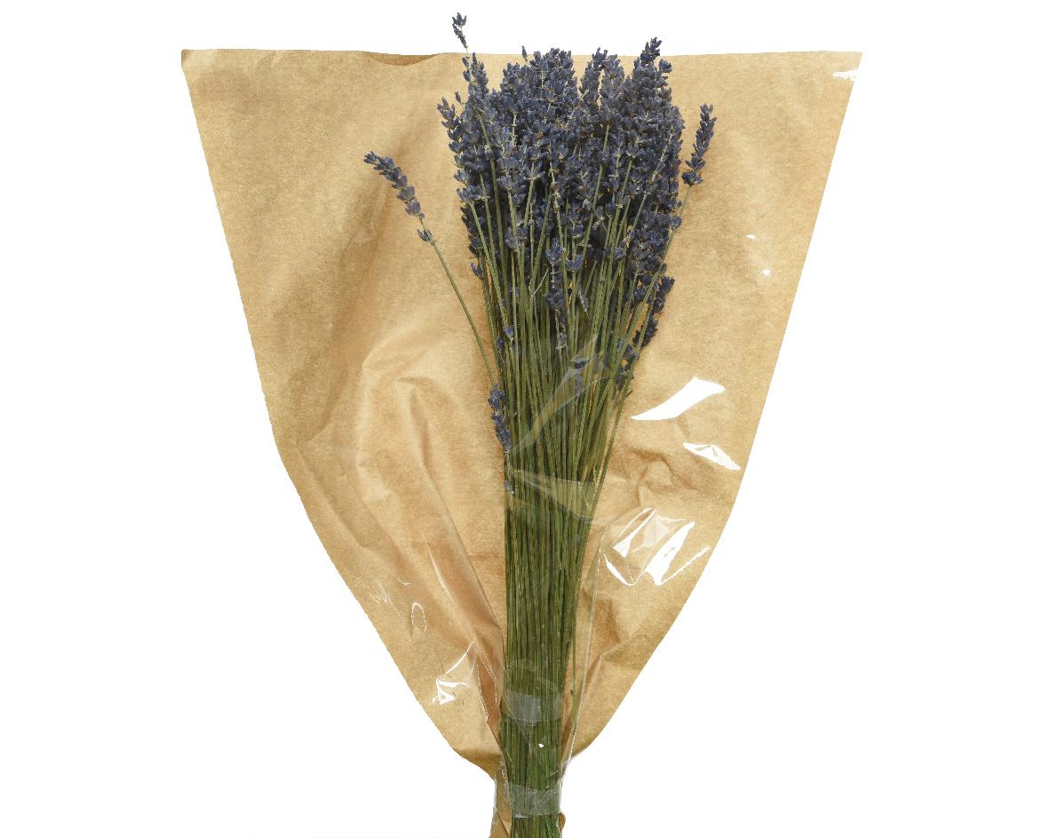 lavendel naturel gedroogd paars
