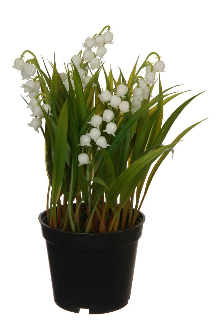 lilly of the valley with grass in plastic pot white