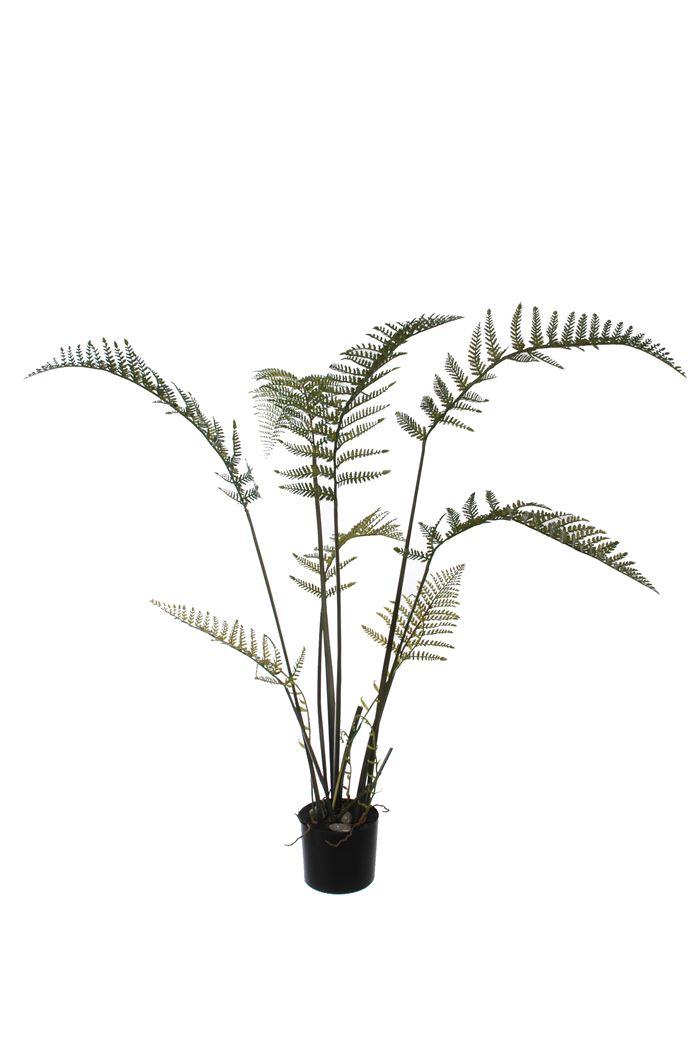 medium fern plant green