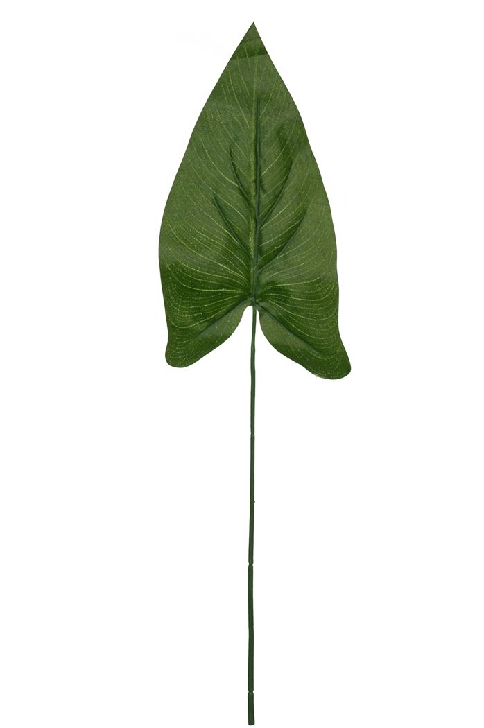 medium leaf caladium