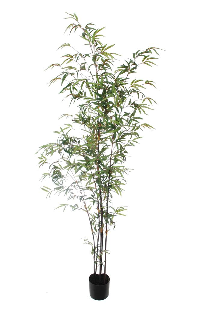 mini black bamboo tree with 1309 leaves