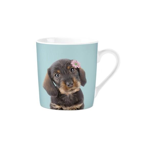 mok pg studio pets dachshund