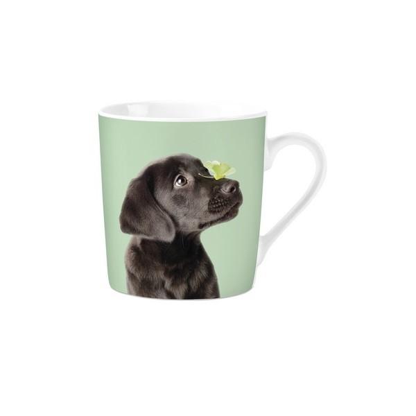 mok pg studio pets labrador
