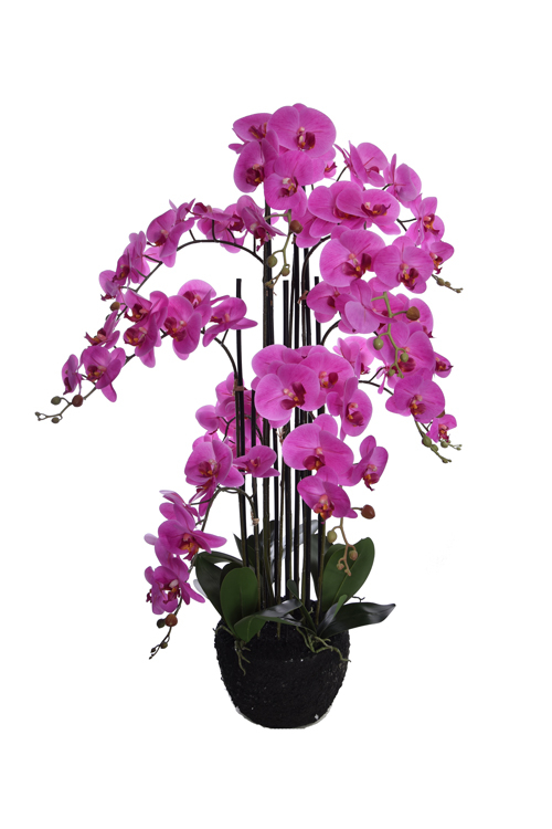 orchid x 10 on soil base lavender
