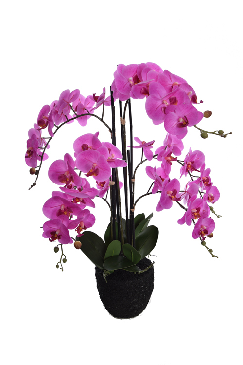 orchid x 6 on soil base lavender
