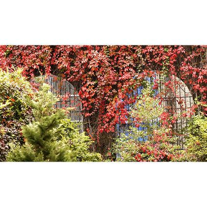 pb blad rood