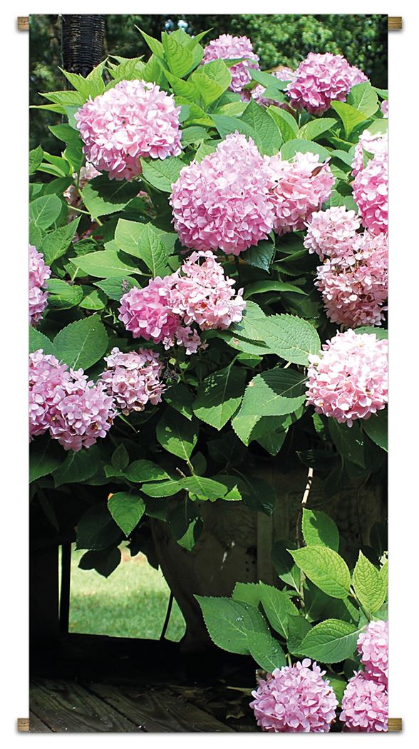 pb-collection tuinbanner hydrangea bush