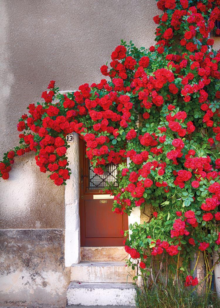pb-collection tuinschilderij door with red flowers
