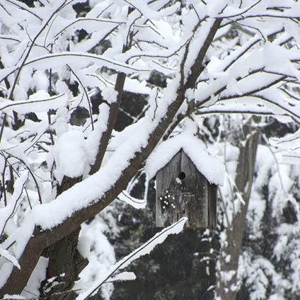 pb vogelhuis/sneeuw