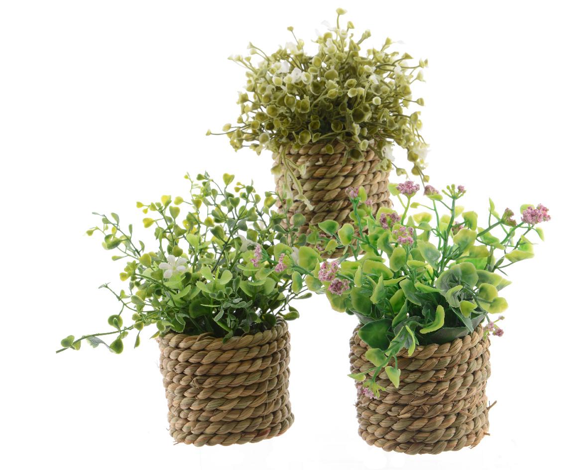plant groen pe pot gras (3ass.)