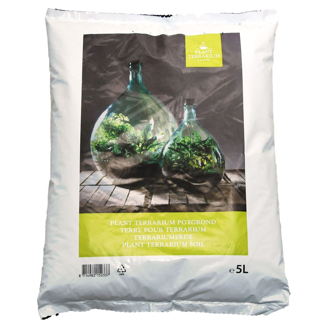 plant terrarium - plant terrarium potgrond
