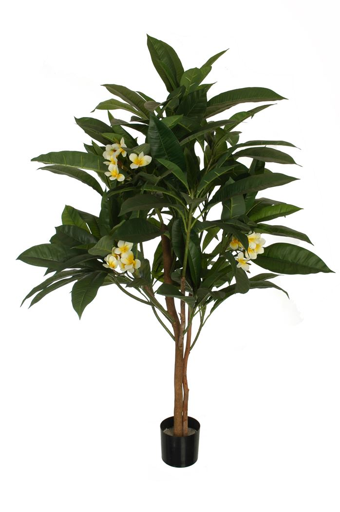 plumeria tree x 2 w/159 leaves in pot cream