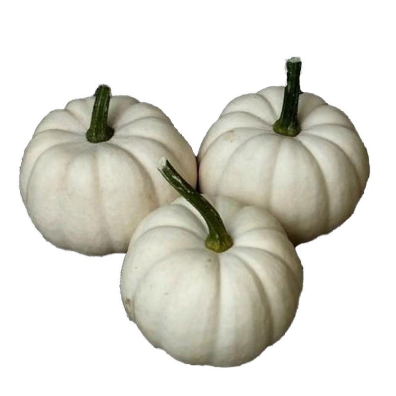 pompoen/sierfruit wit
