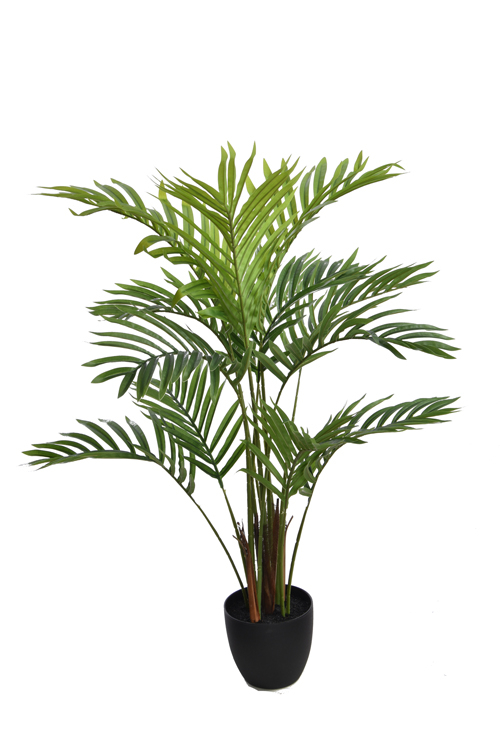 queen palm tree with 13 leaves in pot green