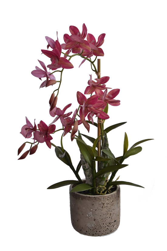 real touch cycnoches spray x 3 in pot mauve