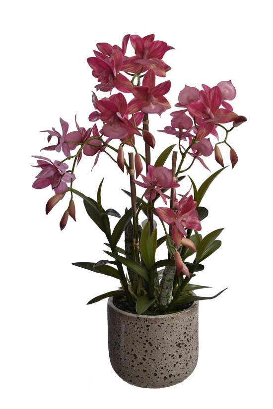 real touch cycnoches spray x 4 in pot mauve