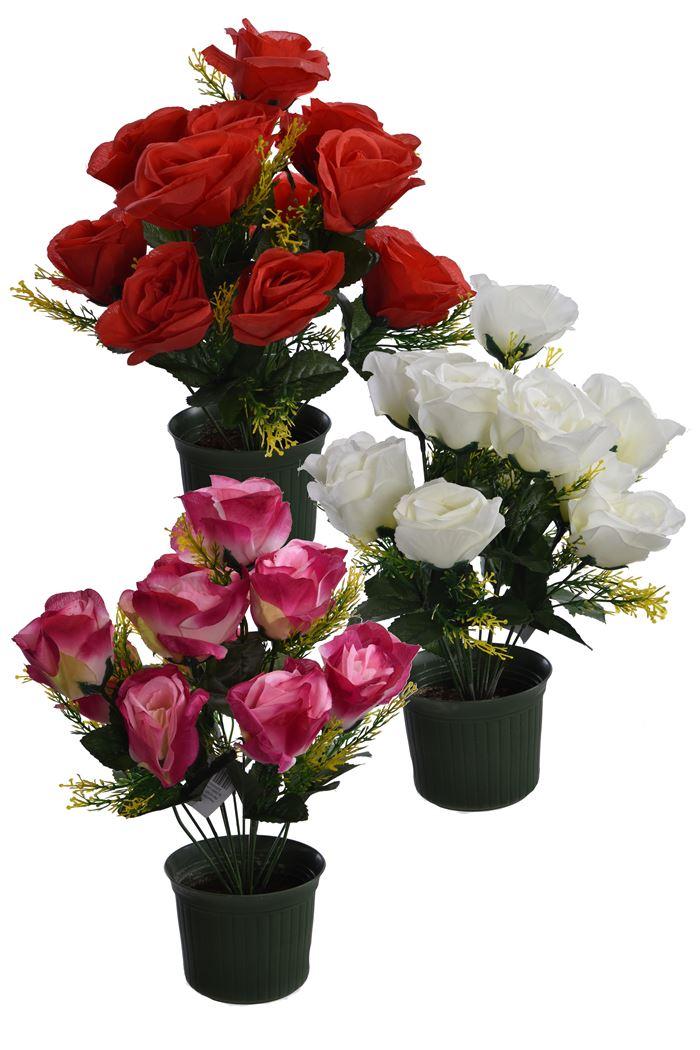 rose bush in pot assorted