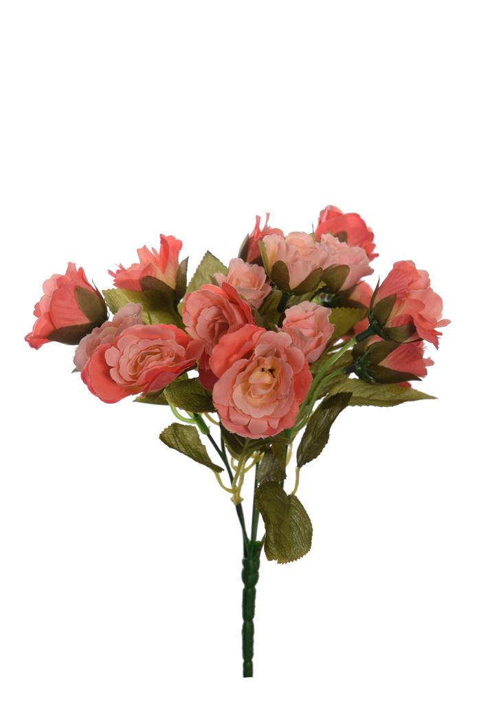 rose bush x 5 with 20 flowers coral