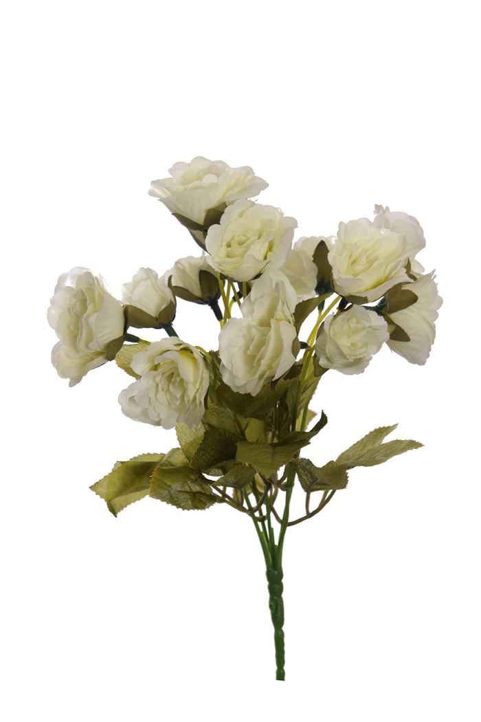 rose bush x 5 with 20 flowers cream