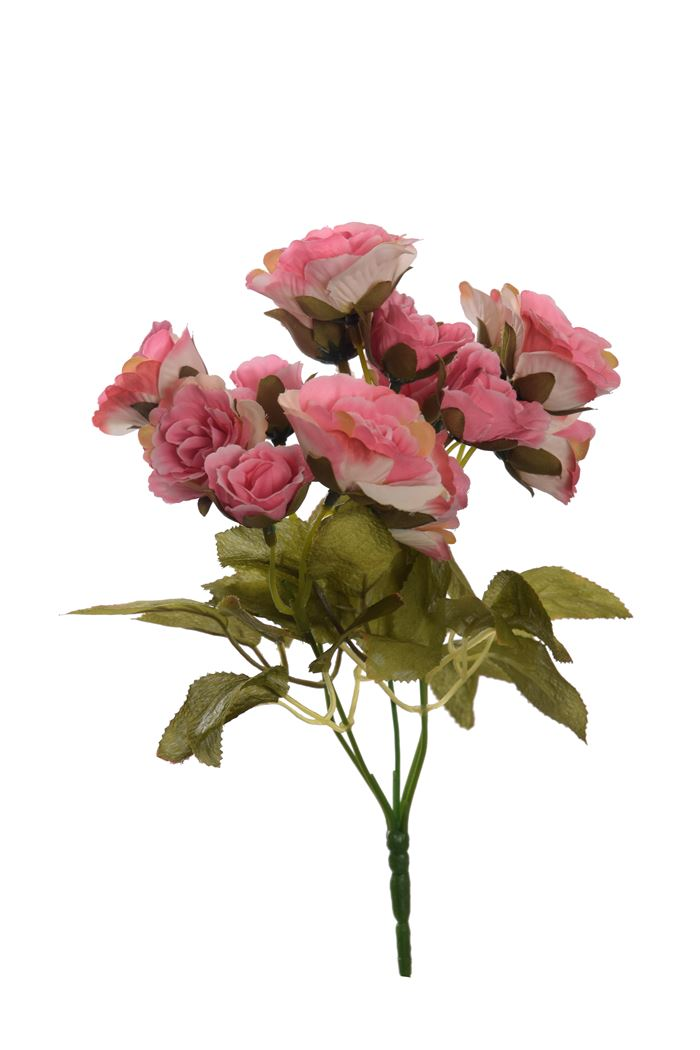 rose bush x 5 with 20 flowers pink