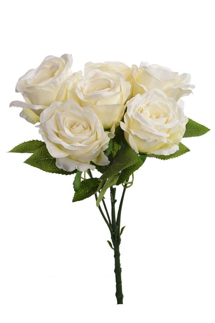 rose bush x 6