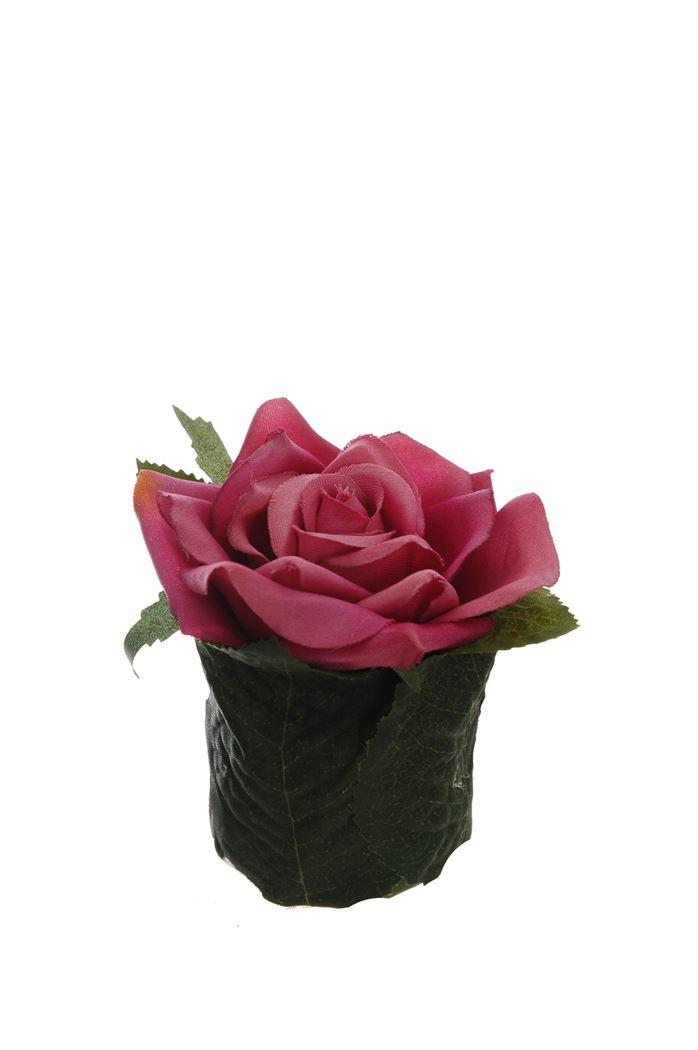 rose head on leaves pot beauty