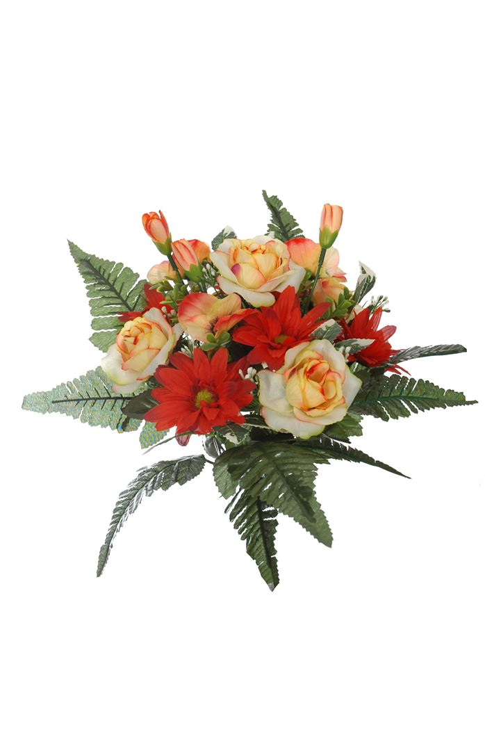 rose/daisy bush x 12 red yellow
