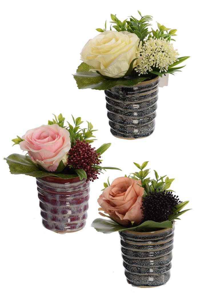 rose/skimmia arrangement in pot assorted