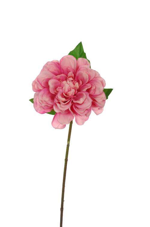 single dahlia pink